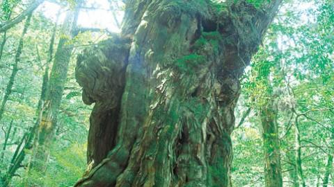世界自然遺産屋久島と指宿温泉ツアー